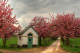 Spring at the Dode Bemde