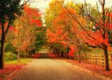 autumn  on LI