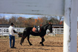 baiting hollow winery horse rescue