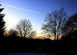 sunrise in backyard