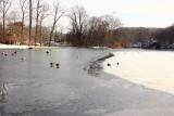 pond at stonybrook