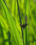 Araignée et proie