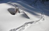 Winter scene (IMG_9497ok1 copy.jpg)