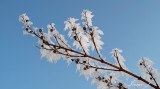 Frost (IMG_8210ok copy.jpg)