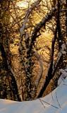 Dancing tree (IMG_8045OK1 copy.jpg)