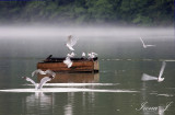 Lake Zbilje (brodolomci1 ok copy.jpg)