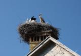 Stork nest (IMG_6864ok.jpg)