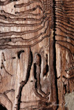 Followed on the bark (IMG_1067OK .jpg)
