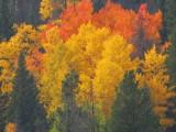 Colorado Fall Foliage - 2012