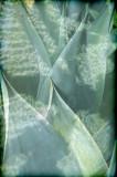 agave dreams