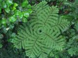 Natural Mandala