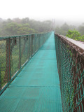 Bridge over the Cloud Forest into the mist