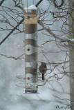 Snowstorm_birdfeeder
