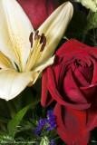 Flowers_2008nov15_087DSC02442 copy.jpg