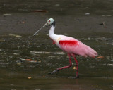 Birds and animals in Costa Rica