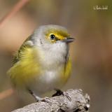oiseau_rare_ou_peu_commun