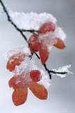 Baton Rouge Snow