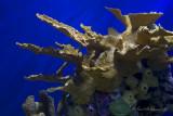 Underwater Formations