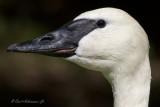 Just a Beak Away