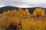 Color Changes near Jackson Lake Teton Natl. Park, Wyoming
