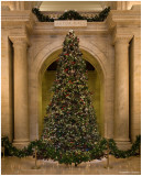 New York Publiic Library Christmas Tree 2008