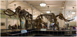 Mammuthus -- The Mammoth