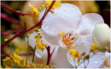 The Greater New York Orchid Show