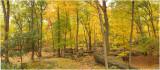 An Immersive Viewpoint of an Autumn Forest