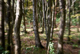 A forest (2)