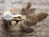 Still life III - Requiem for a Bird