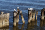 Wood and Gulls