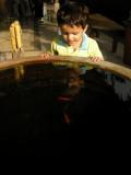 Lots of fish at the Komaneka Resort.