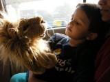 Lion puppet.