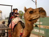 Rahil's first camel ride about to begin