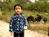 Rahil's first encounter with turkeys