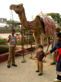 With camel after ride