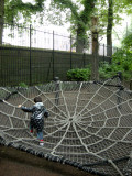 Note giant spider above web.