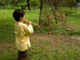 Serenading the deer