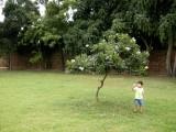 Under a Champa tree
