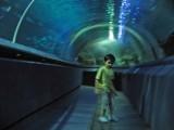 Inside the Forum Istanbul Aquarium's Tunnel.