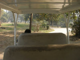 Chaffeured through the Delhi National Zoo