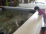 Big hotel fish.