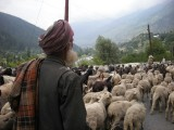 Goat herder along the way to Srinagar