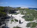 Local penguins