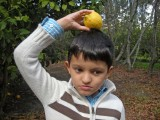 Attempting to balance a lemon