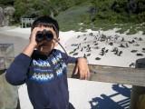 Looking the wrong way at Boulders Beach