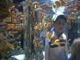 Inside the clownfish tank at the Cape Town Aquarium