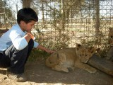 Highlight of the trip:  petting lion cubs!