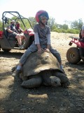 Found a giant tortoise!