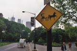 Horse and Buggy Central Park.jpg